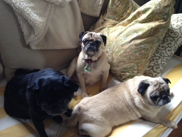 Izzy, Nando and their BFF Daisey!