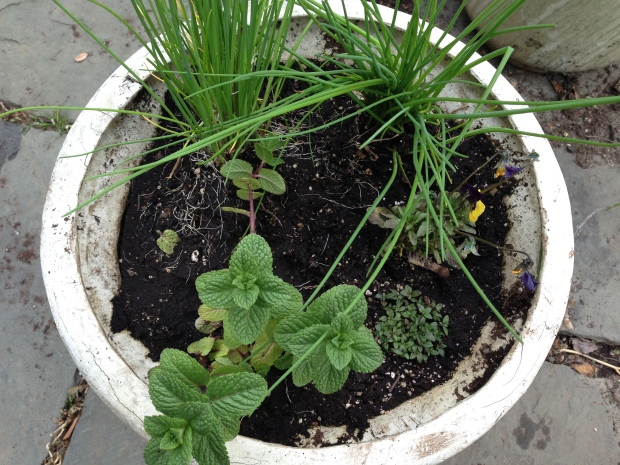 More herbs, chives