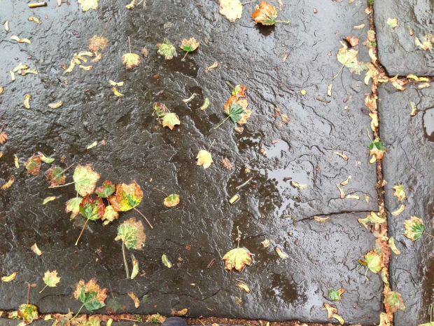 pretty leaves wet sidewalk