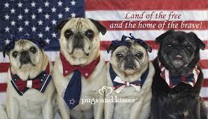 Patriotic Pugs