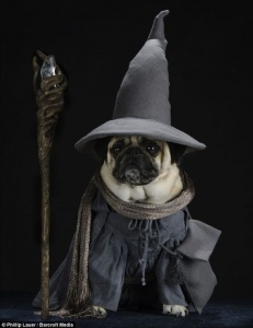 Witchy pug