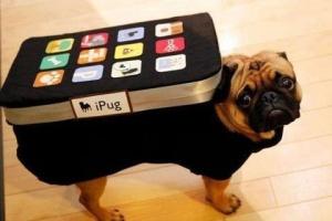 iphone pug