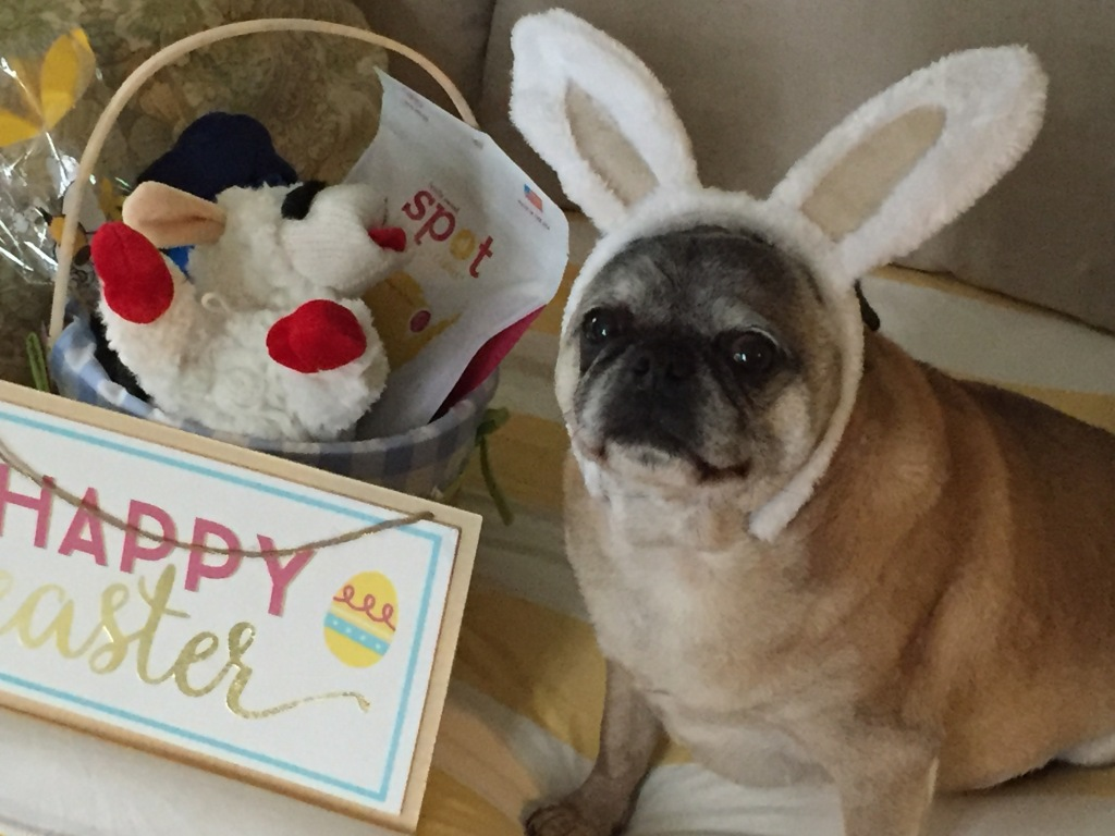 Happy Easter from Percy and me!