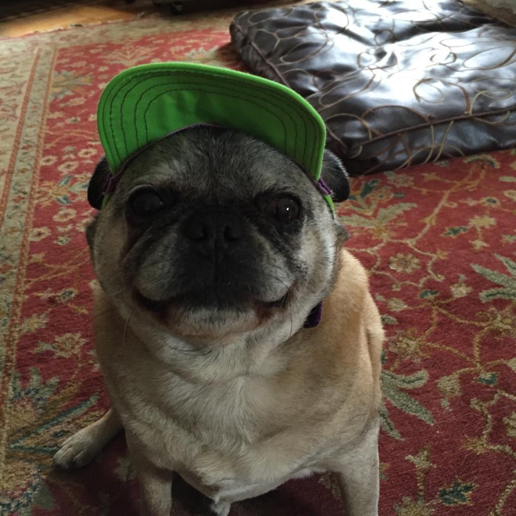 Percy's hat