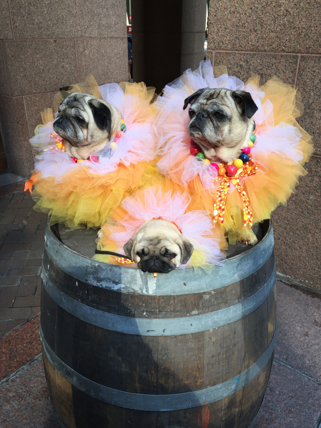 The Pugdashians, pug celebrities