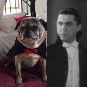Notice a similarity?